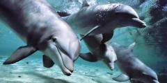 Parlare con i delfini? Presto sarà possibile